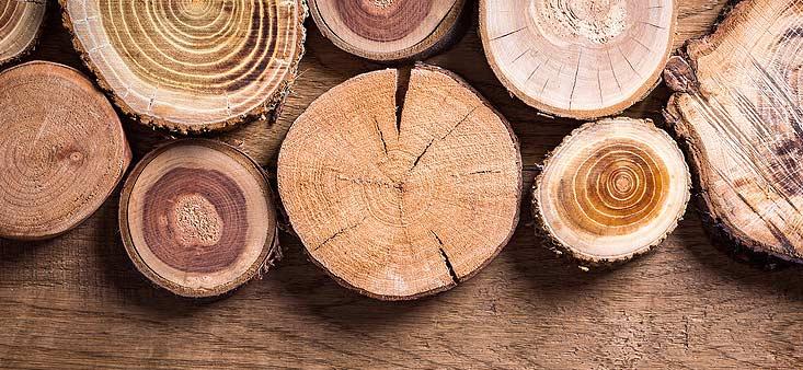 Rondins de bois sciés à la scie à bûches
